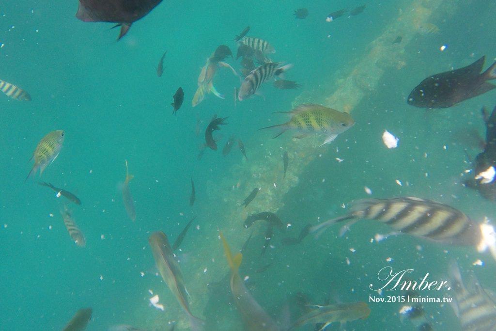 科隆島,菲律賓,浮潛,深潛,珊瑚花園,盧松砲艦沈船,帕斯島,東沈船,跳島,mini-tour,034