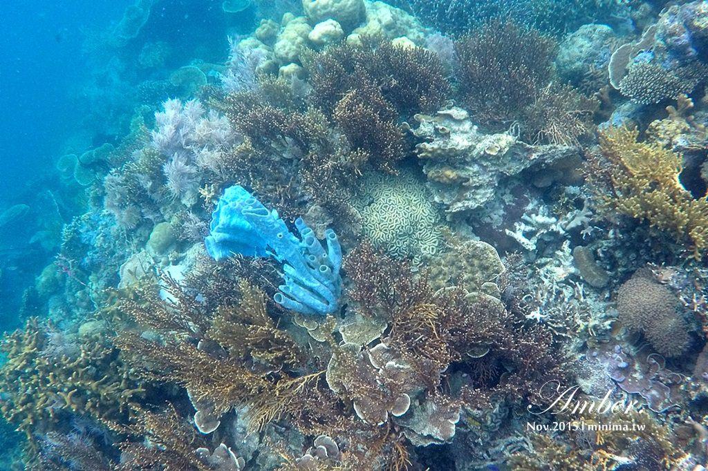 科隆島,菲律賓,浮潛,深潛,珊瑚花園,盧松砲艦沈船,帕斯島,東沈船,跳島,mini-tour,003