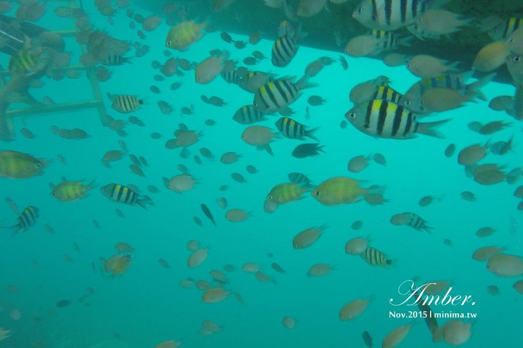 科隆島,菲律賓,浮潛,深潛,珊瑚花園,盧松砲艦沈船,帕斯島,東沈船,跳島,mini-tour,008