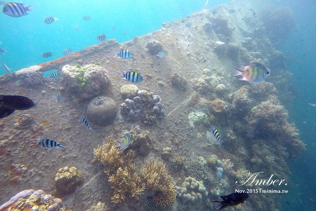 科隆島,菲律賓,浮潛,深潛,珊瑚花園,盧松砲艦沈船,帕斯島,東沈船,跳島,mini-tour,012