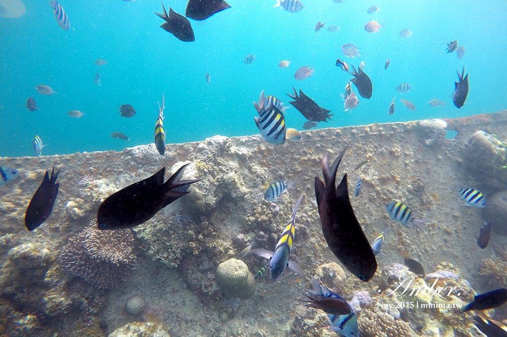 科隆島,菲律賓,浮潛,深潛,珊瑚花園,盧松砲艦沈船,帕斯島,東沈船,跳島,mini-tour,013