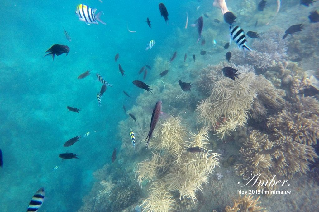 科隆島,菲律賓,浮潛,深潛,珊瑚花園,盧松砲艦沈船,帕斯島,東沈船,跳島,mini-tour,014
