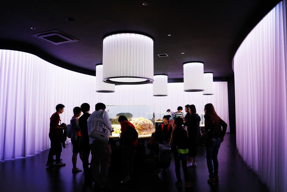 LaLaport購物中心,神奇寶貝互動館,大阪必去景點,萬博紀念公園,NIFREL,海遊館,水族館,生態館,p9820630