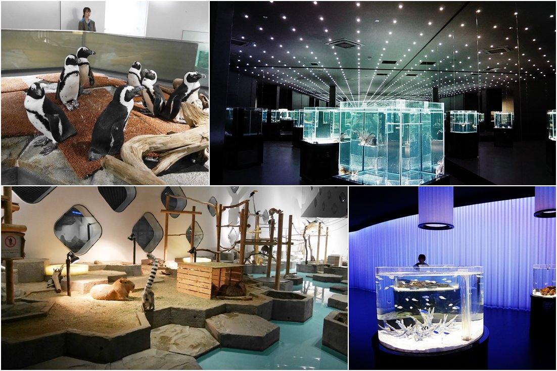 LaLaport購物中心,神奇寶貝互動館,大阪必去景點,萬博紀念公園,NIFREL,海遊館,水族館,生態館