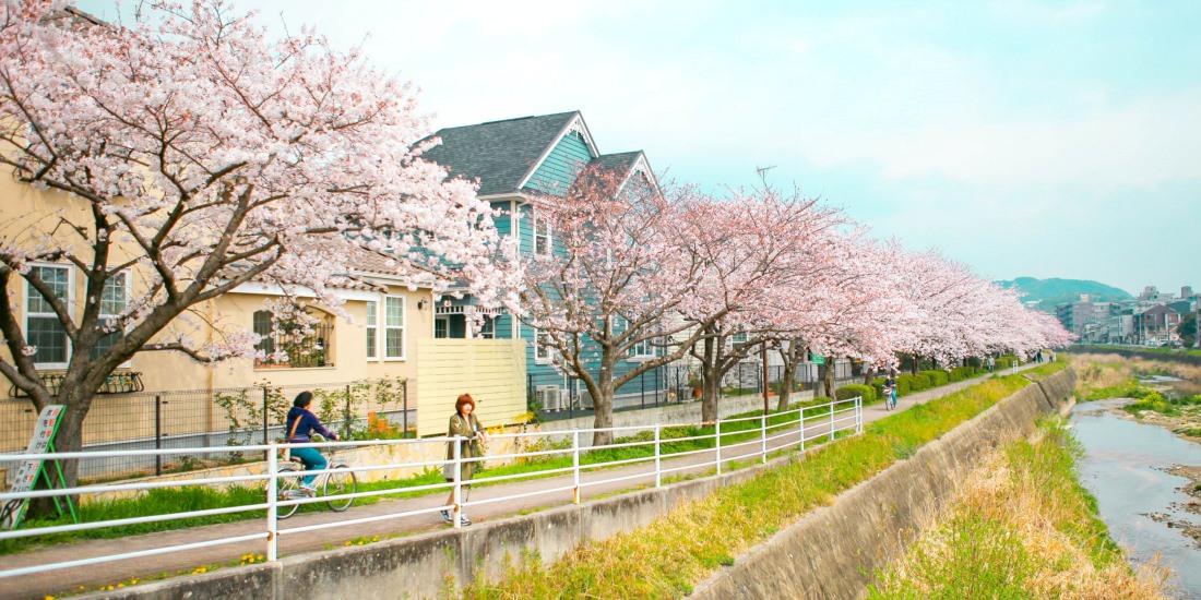 九州自駕,九州賞櫻,九州自遊行,日本賞櫻景點推薦,櫻花季,太宰府景點